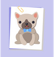 dog picture pug and bow poster vector image