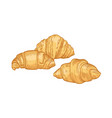 fresh delicious croissants isolated on white vector image vector image