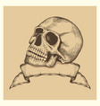 human skull sketch with ribbon banner vector image vector image