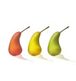 set of pears vector image