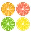 Citrus fruit set vector image