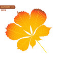 autumn nut leaf isolated on a white background vector image vector image