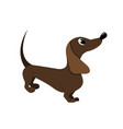 cartoon dachshund vector image vector image