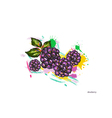 dewberry with colorful splashes vector image vector image