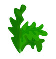 frisee lettuce icon cartoon style vector image vector image
