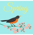 robin bird vector image vector image