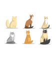 collection different cats breeds lovely vector image vector image