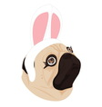 lady dog rabbit on white background vector image vector image