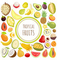 tropical fruits exotic meal avocado durian vector image vector image