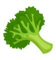 healthy broccoli icon cartoon style vector image