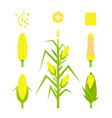 set yellow corn in flat style isolated on vector image vector image