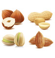 collection of various nuts on isolated on white vector image