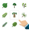 flat icon natural set of leaves spruce leaves vector image vector image