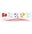 leukocytes erythrocytes platelets plasma set vector image vector image