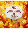 Sale with autumn leaves EPS 10 vector image