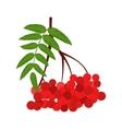 Branch of red rowan icon vector image vector image