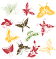 Butterflies ornaments set vector image