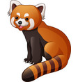 cartoon red panda isolated on white background vector image vector image