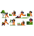 gardening man cutting tree leaves bushes twigs vector image