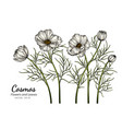 white cosmos flower and leaf drawing with line vector image vector image