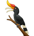 cartoon hornbill bird isolated on white background vector image vector image