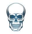 image of the skull vector image