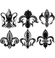 lily flowe emblem vector image