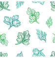 seamless pattern with herbs vector image vector image