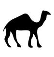 Camel icon vector image vector image