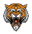colorful aggressive strong tiger head vector image vector image