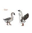 hand drawn goose isolated engraved style vector image vector image