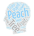 History Of Peach Trees Prunus Persica text vector image vector image