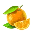 picture of orange vector image