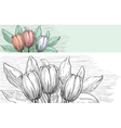 spring tulips vector image vector image