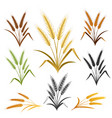 wheat ears emblem set vector image