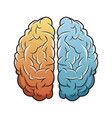 human brain anatomy image vector image