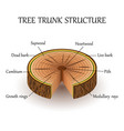 layers tree vector image