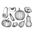 pumpkins big set vector image vector image
