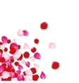 Rose petals background For presentations vector image vector image