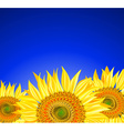 Row of Sunflowers on a Blue Background vector image