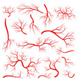 creative of red veins isolated vector image