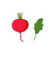 red radish with leaves isolated on white vector image vector image