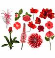 set summer wild red floral vector image