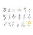 doodle plants set for honey bees vector image