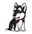 husky breed dog in a sitting pose vector image vector image