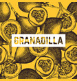 sweet granadilla background vector image vector image