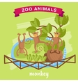 Zoo Animal Monkey vector image vector image