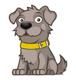 gray outbred dog in a sitting pose vector image vector image