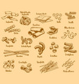 italian pasta types and names vector image vector image