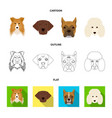 muzzle of different breeds of dogscollie breed vector image vector image